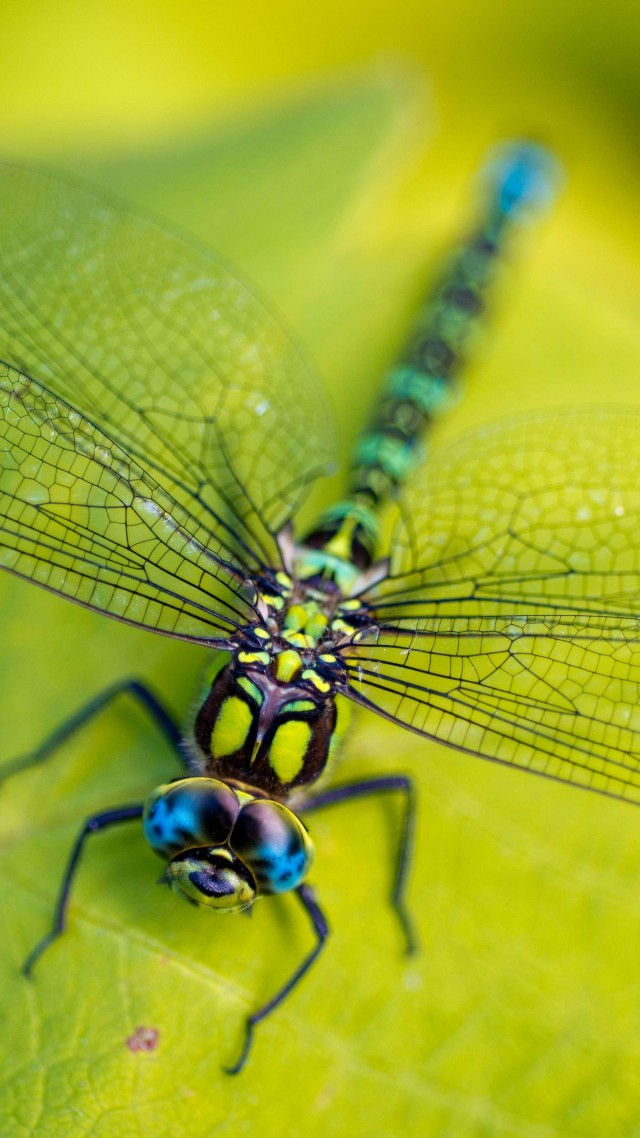 Dragonfly, leaves, wings, green, insect, macro, nature (vertical)