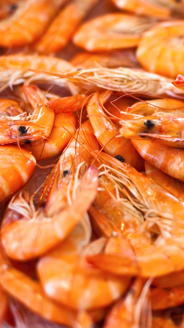 shrimp (vertical)