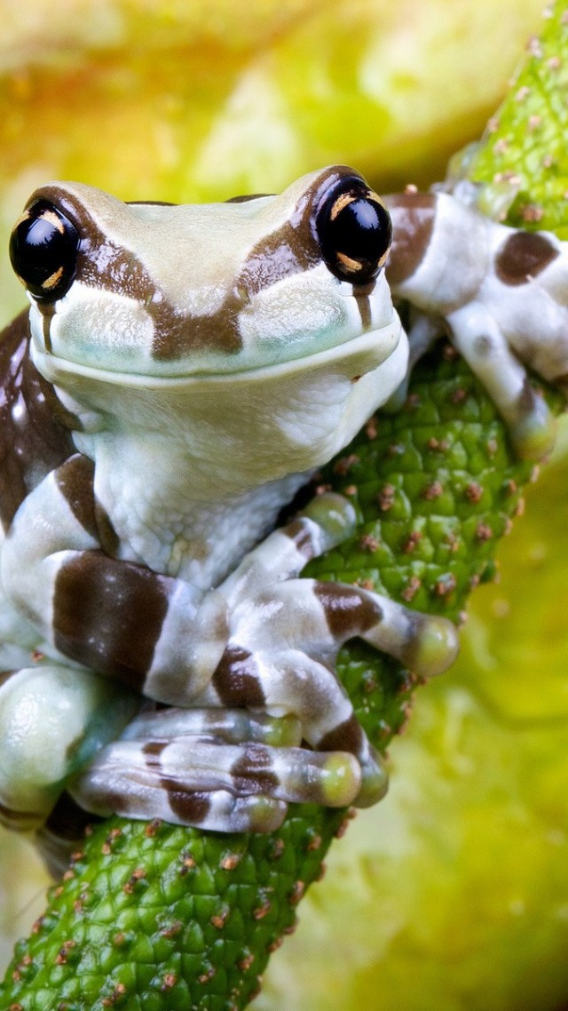 Frog, branch, exotic, white, green, eyes, reptiles, animal, nature (vertical)