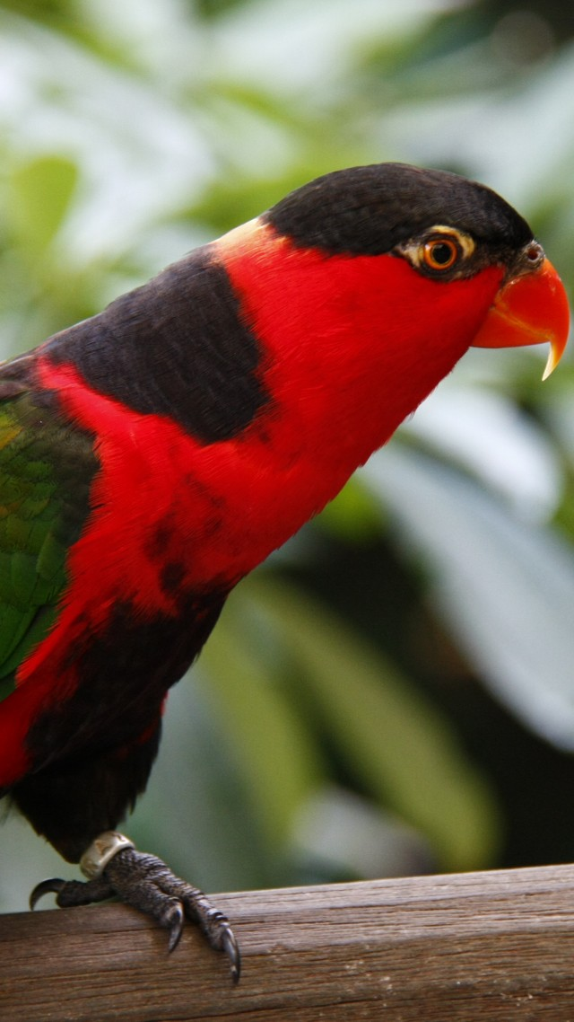 Parrot, Jurong Bird Park, tourism, bird, animal, nature, red, green (vertical)