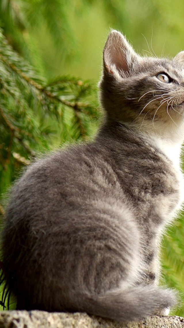 wallpaper kitten cat cute 4k animals 14577