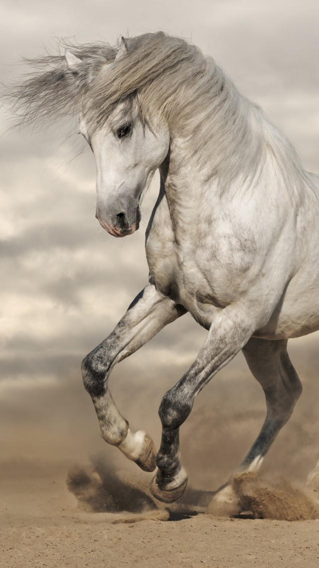 Wallpaper Horse, 8k, Animals #14945
