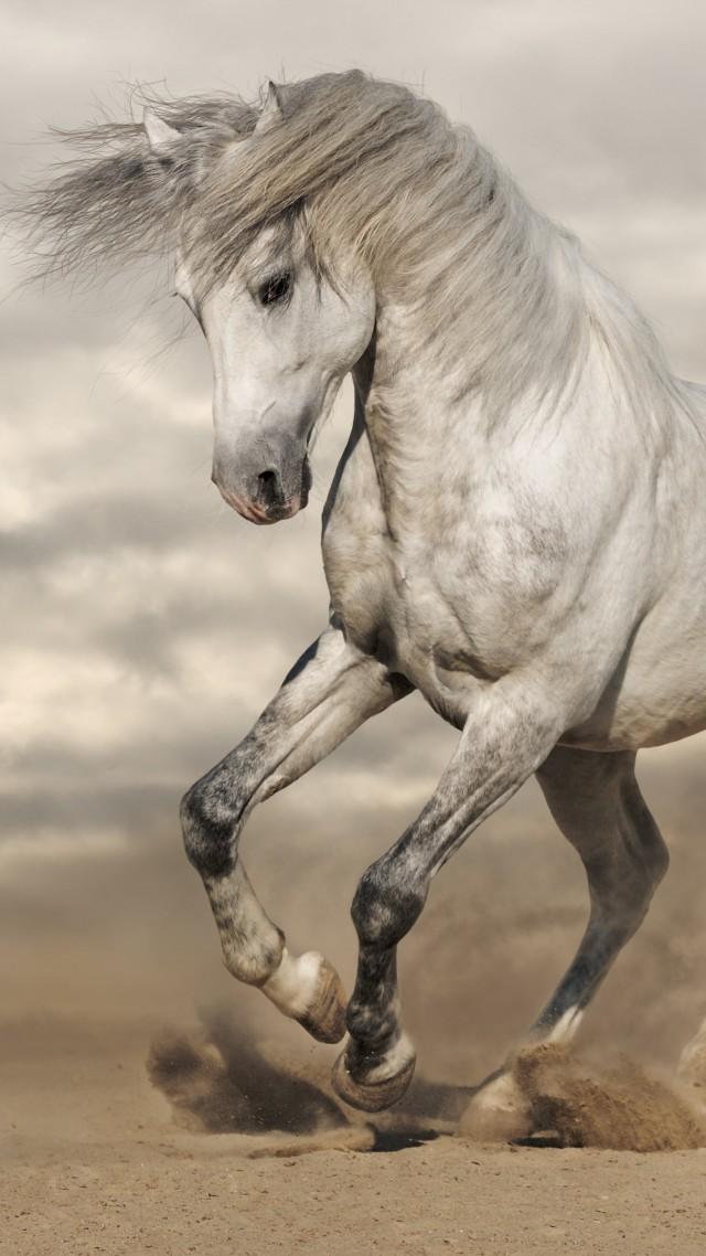 8k Animal Wallpaper Download: Wallpaper Horse, 8k, Animals #14945
