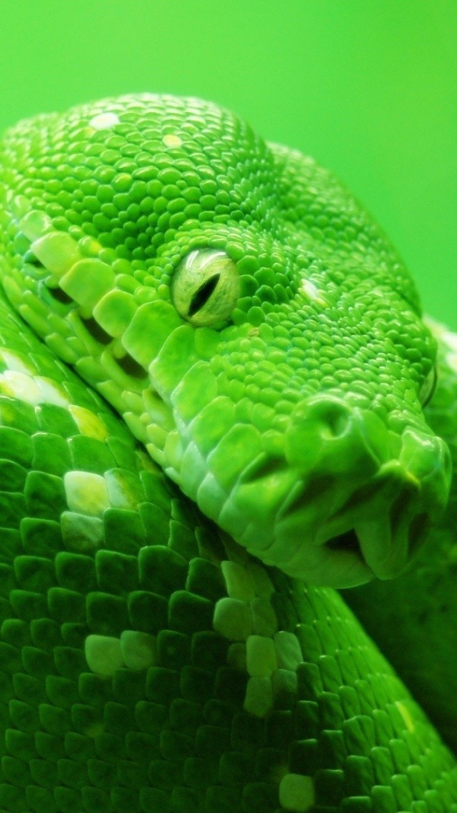 Wallpaper Snake Green 4k Animals 14978