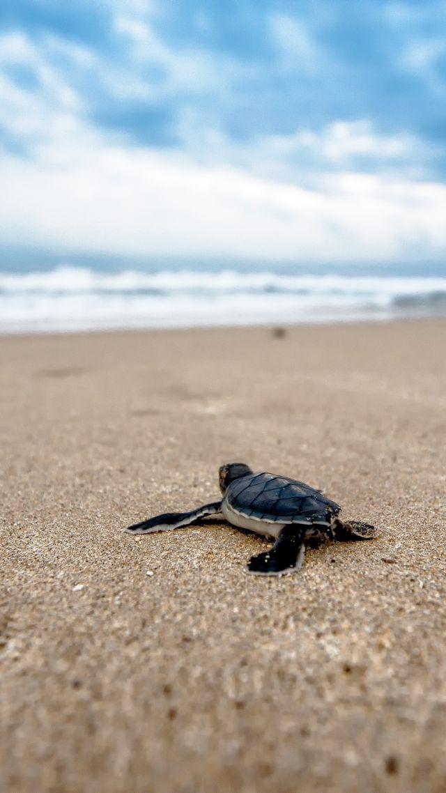 Turtle Beach 4k Vertical