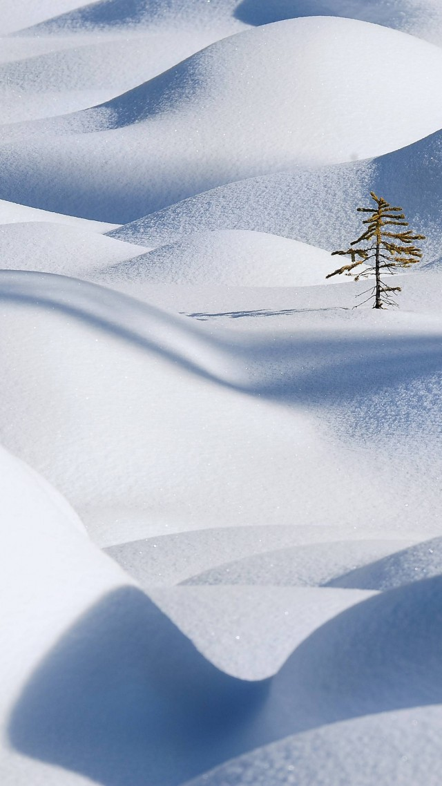 Snow, 4k, HD wallpaper, Snowdrift, Clean, Fir-tree (vertical)