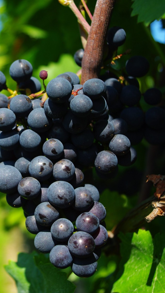 grapes, 4k (vertical)
