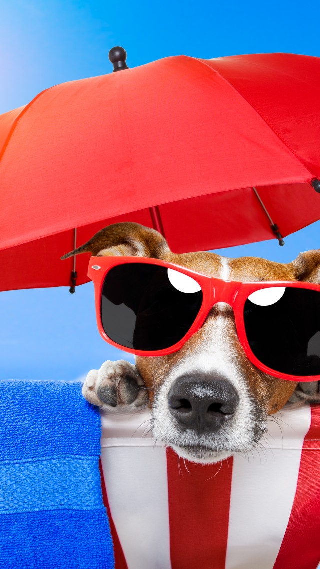 Dog, puppy, sun, summer, beach, sunglasses, umbrella, vacation, animal, pet, sky (vertical)