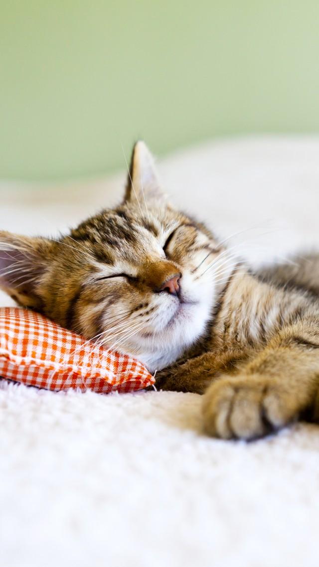 Wallpaper cat, cute animals, sleep, 5k, Animals #15368