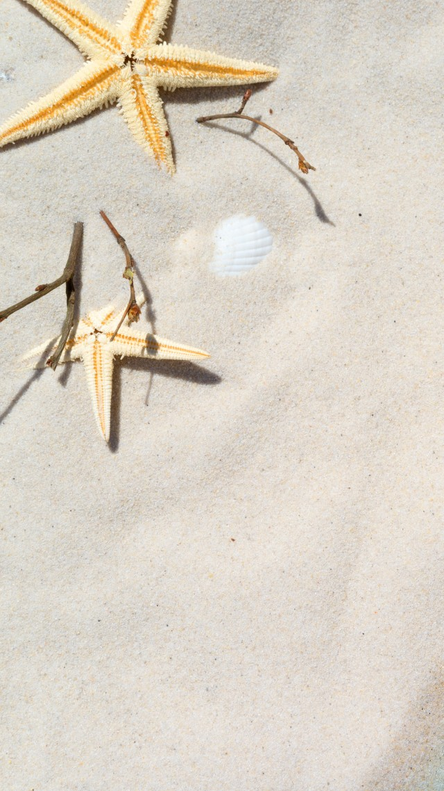 Starfish Shell Sand 8k Vertical