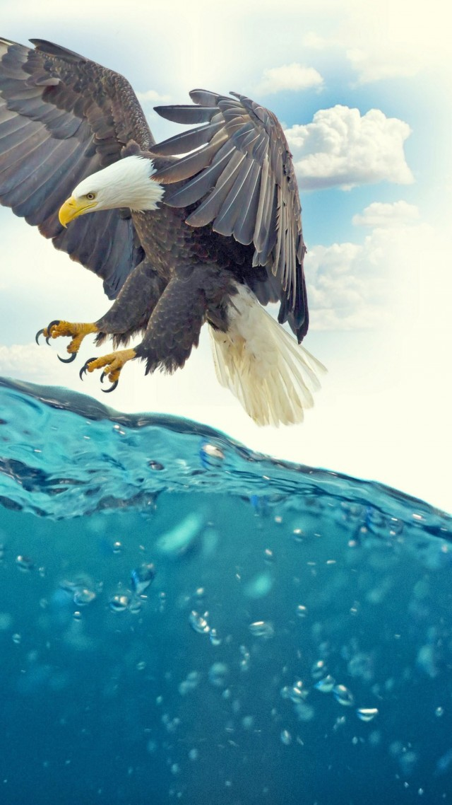 wallpaper fish, eagle, underwater, 4k, nature 15952 page 680fish, eagle, underwater, 4k (vertical)