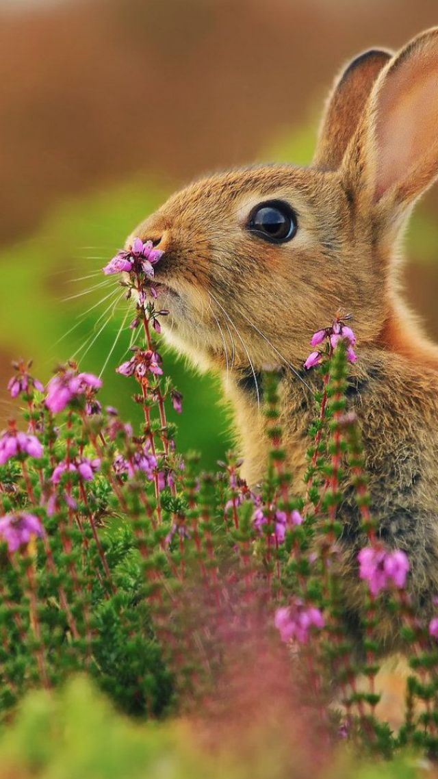 Wallpaper Rabbit, Cute Animals, Flowers, 4k, Animals #15979