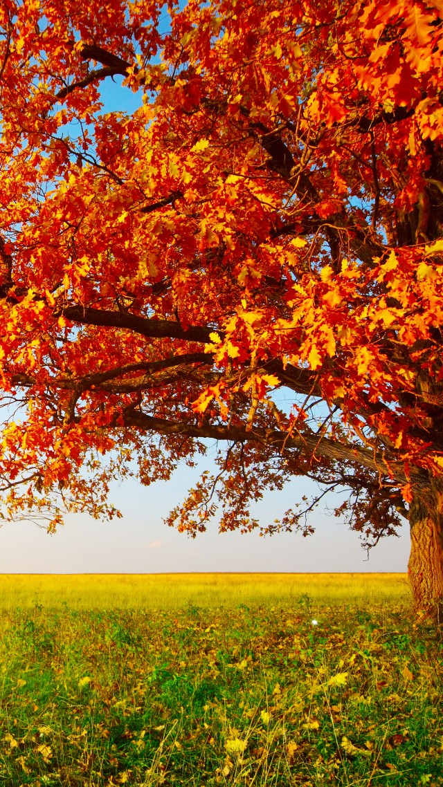 Wallpaper Autumn Tree Leaves Field Grass 8k Nature 16081 Page 7