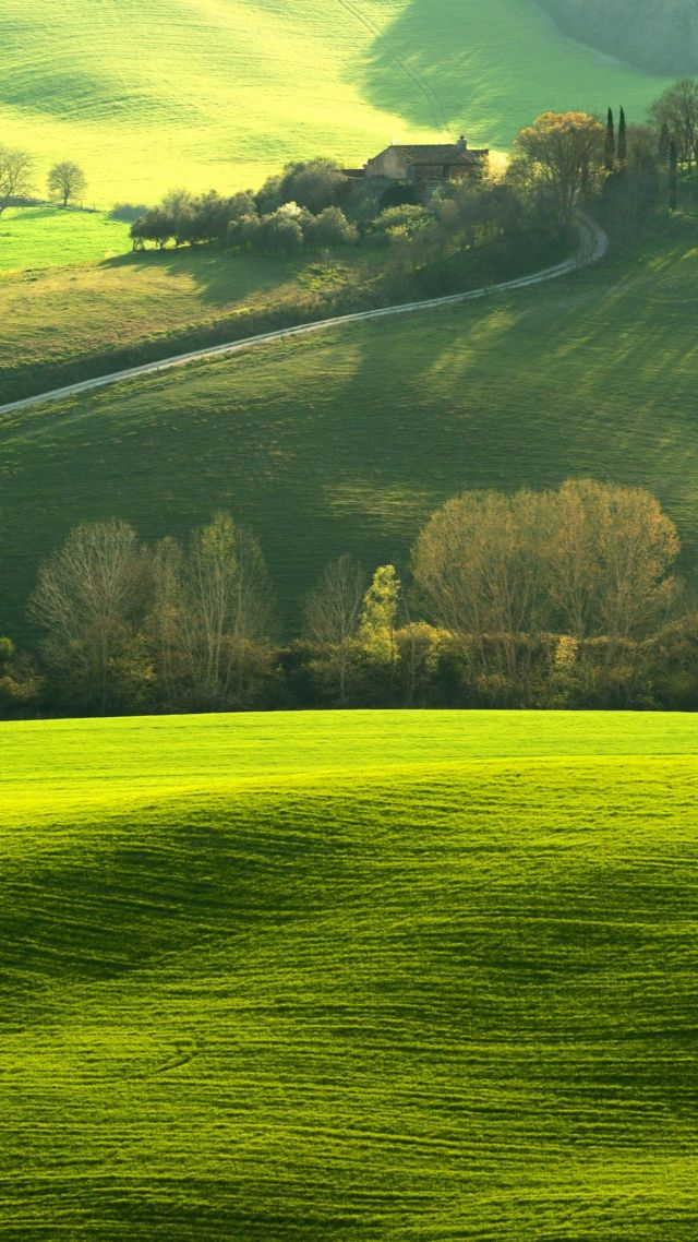 Tuscany, Italy, Europe, hills, green, field, 4K (vertical)