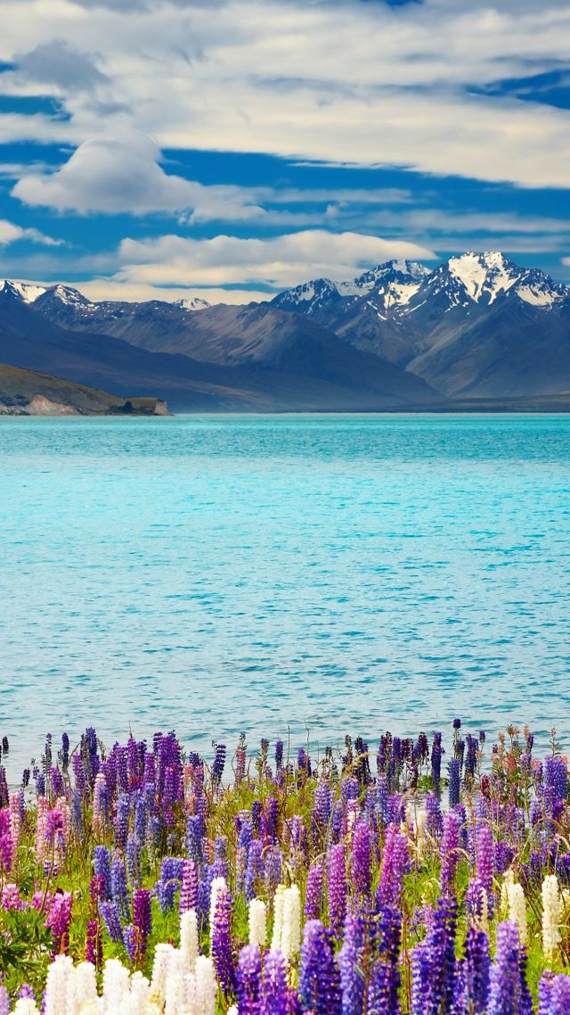 Lake Tekapo, New Zealand, mountains, flower, 4k (vertical)