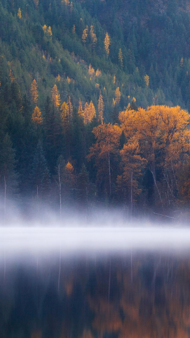 Echo Lake, forest, trees, fog, Columbia, autumn, 5k (vertical)