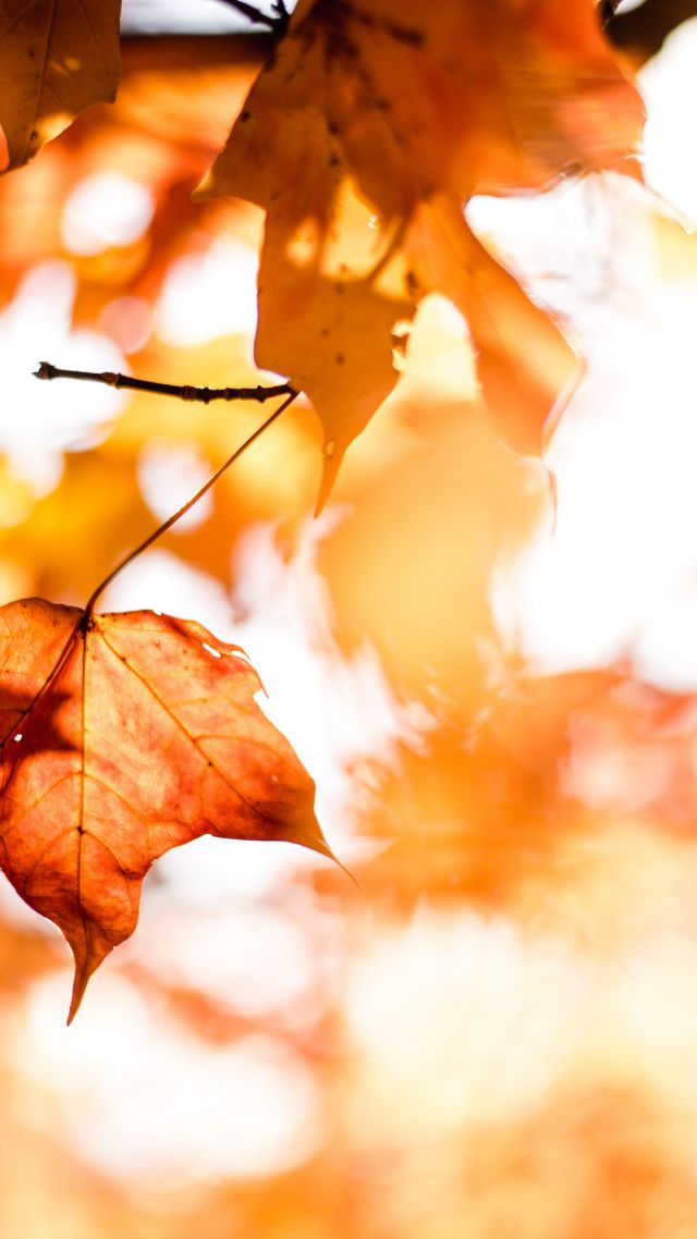 leaves, autumn, orange, 5k (vertical)