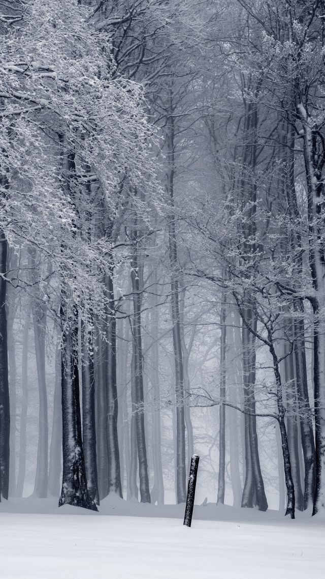 forest, trees, snow, winter, 4k (vertical)