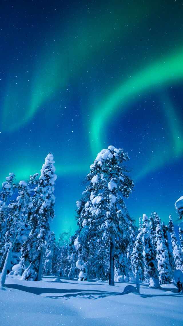 Lapland, Finland, winter, snow, tree, night, northern lights, 5k (vertical)