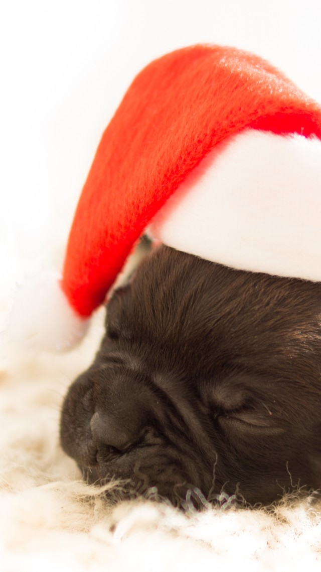 Christmas, New Year, puppy, cute animals, 4k (vertical)