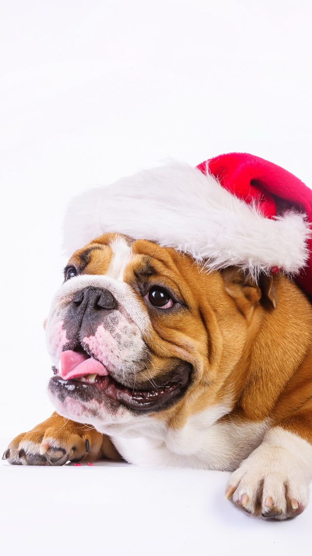 Christmas, New Year, dog, cute animals, 4k (vertical)