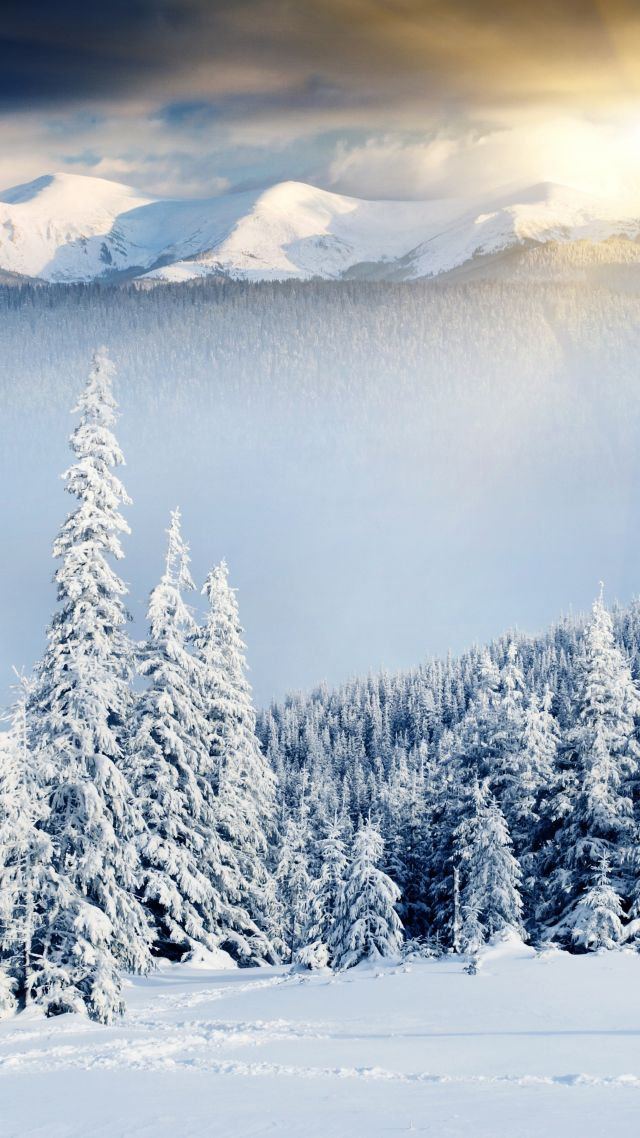 mountains, forest, trees, snow, winter, 8k (vertical)