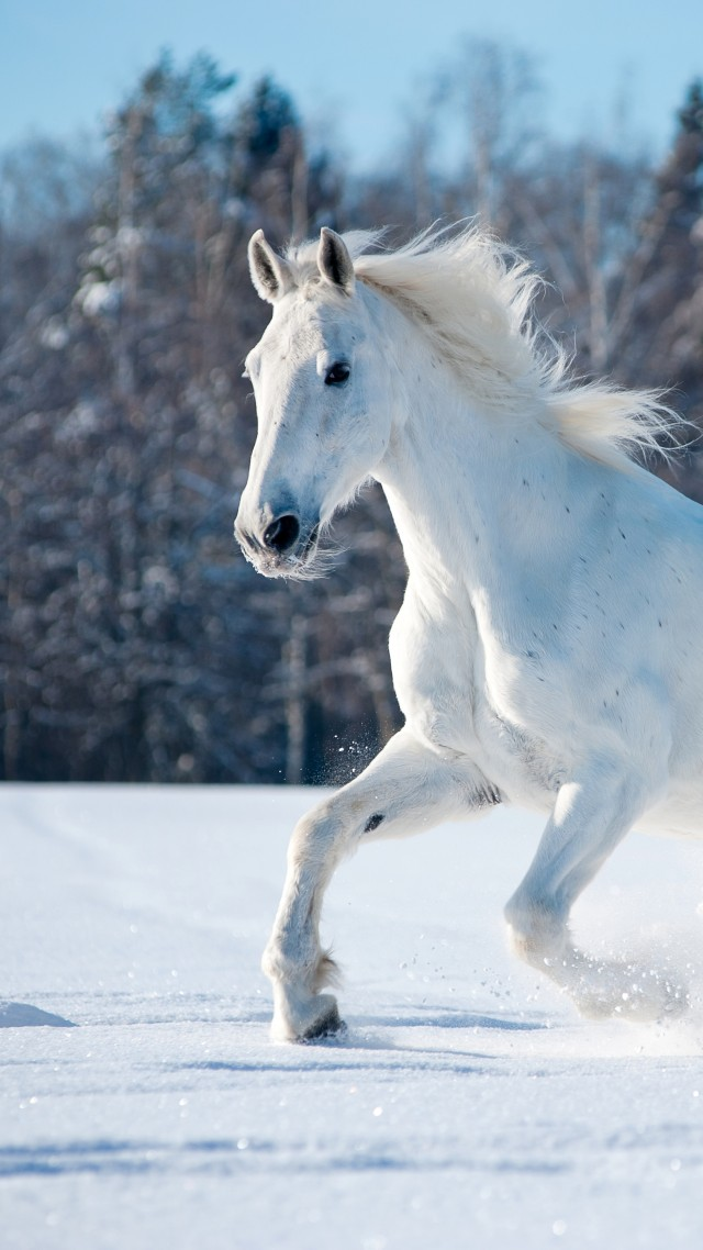 horse, cute animals, snow, winter, 5k (vertical)