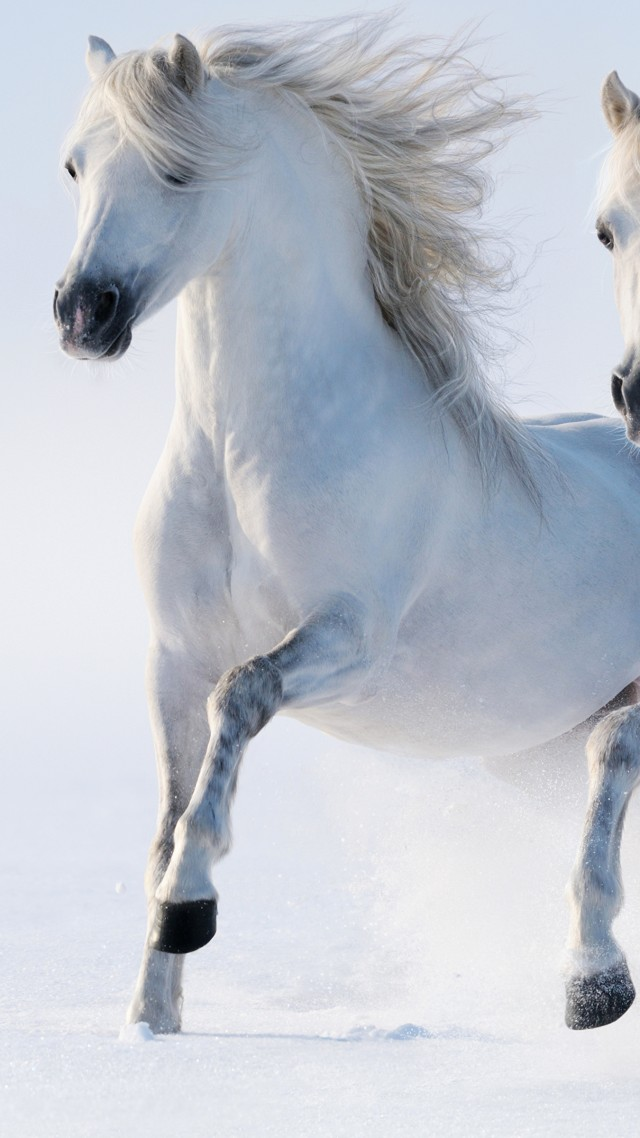 Wallpaper Horses, Cute Animals, Snow, Winter, 5k, Animals
