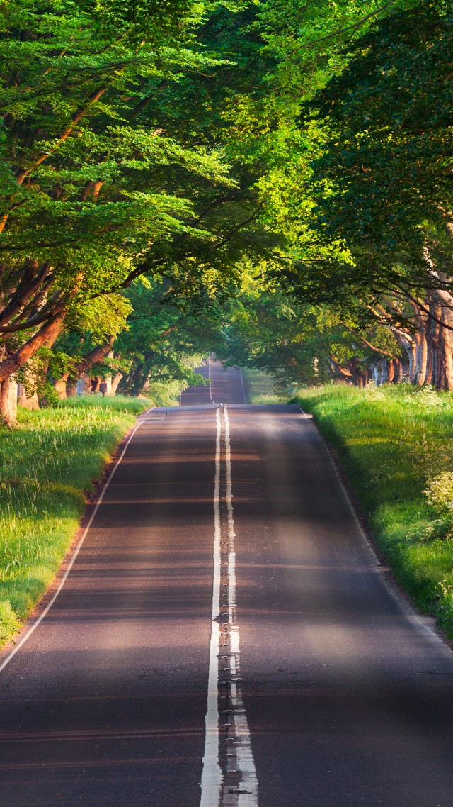 Road Trees Summer 4k Vertical