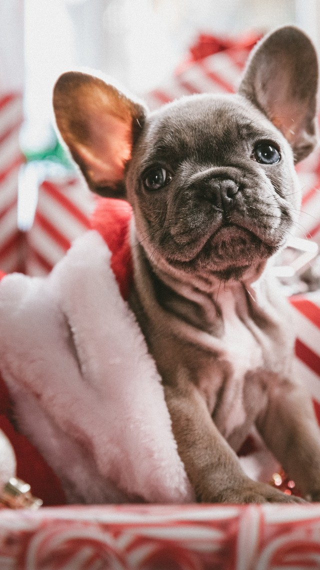 Christmas, New Year, puppy, cute animals, 5k (vertical)