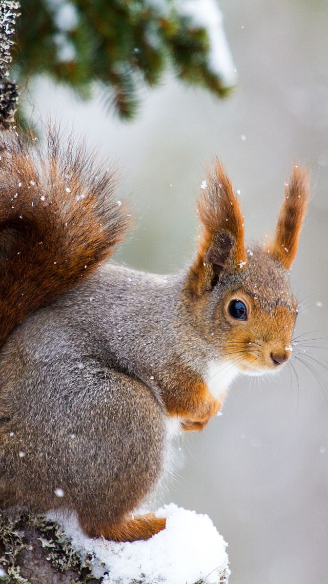 squirrel, cute animals, winter, 5k (vertical)
