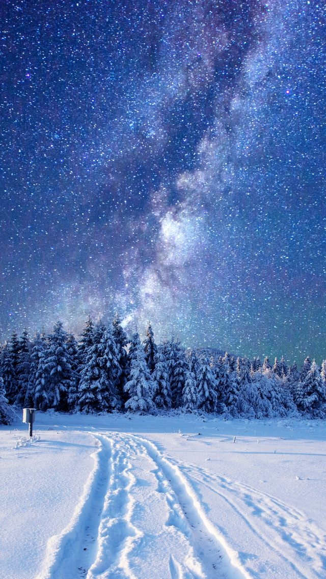forest, snow, winter, sky, stars, night, 5k (vertical)