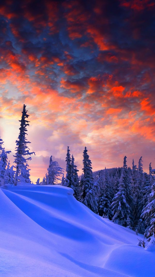forest, snow, winter, sunrise, clouds, 8k (vertical)