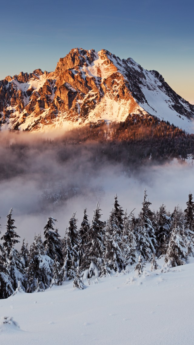 mountains, forest, snow, winter, fog, 8k (vertical)