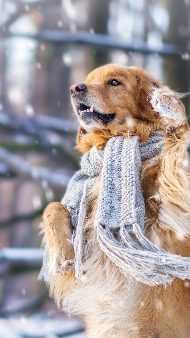 Wallpaper dog, cute animals, snow, winter, 4k, Animals #17412 | 640 x 1138 jpeg 181kB
