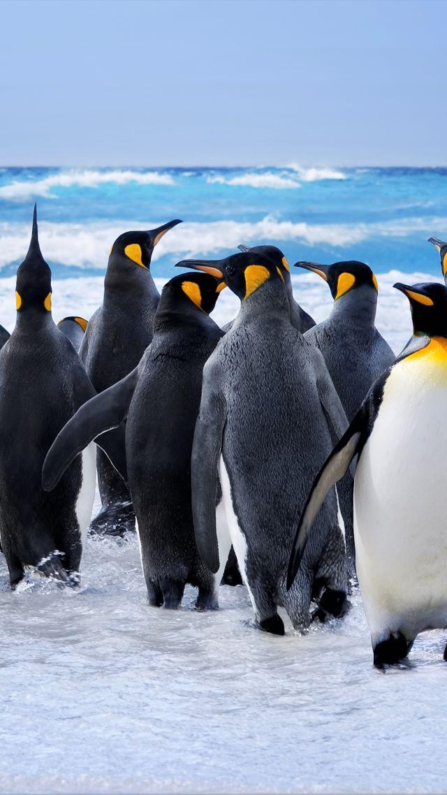 8k Animal Wallpaper Download: Wallpaper Penguins, Ocean, 8k, Animals #17417