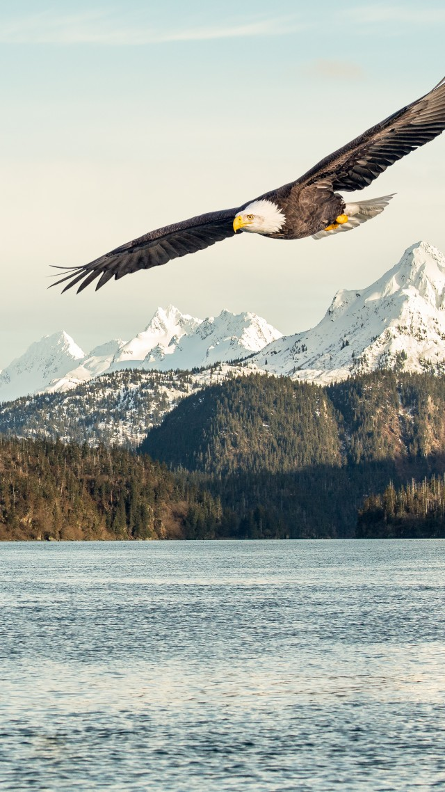 eagle, mountains, lake, 5k (vertical)