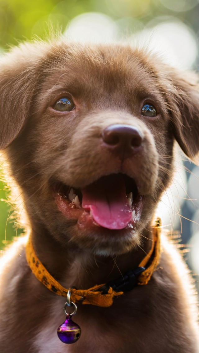Funny animals, Dog, Puppy, 6K (vertical)