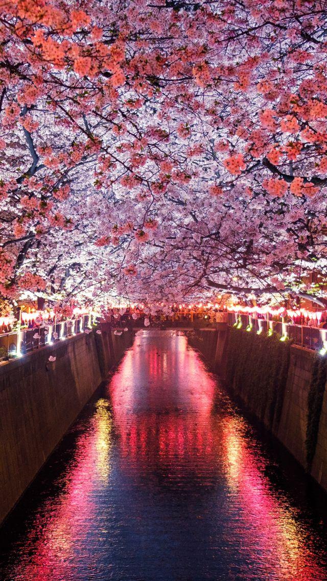 Wallpaper Sakura Spring 5k Nature 19445