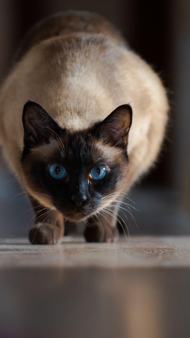 Blue Puppy Food >> Wallpaper cat, cute animals, 4K, Animals #19579