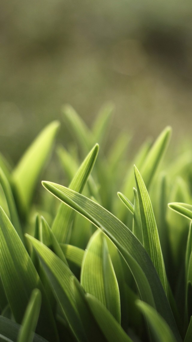 grass, green, 5K (vertical)