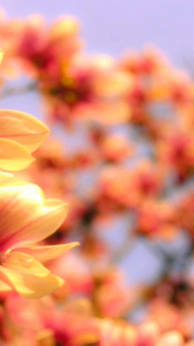 4k HD Wallpaper Asia Spring Flower Vertical