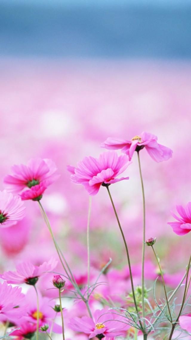 Wallpaper Wildflowers Hd 4k Wallpaper Field Pink Flower