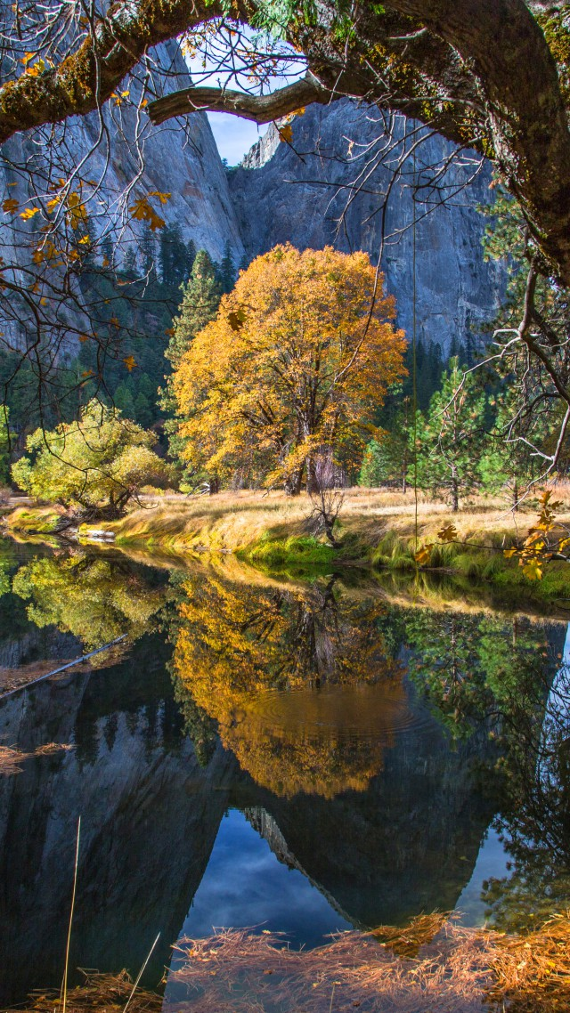 Wallpaper Yosemite 5k 4k Wallpaper 8k Forest Osx