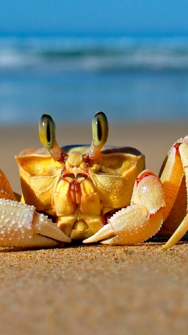 Wallpaper Crab, Mediterranean sea, sand, funny, cute ...