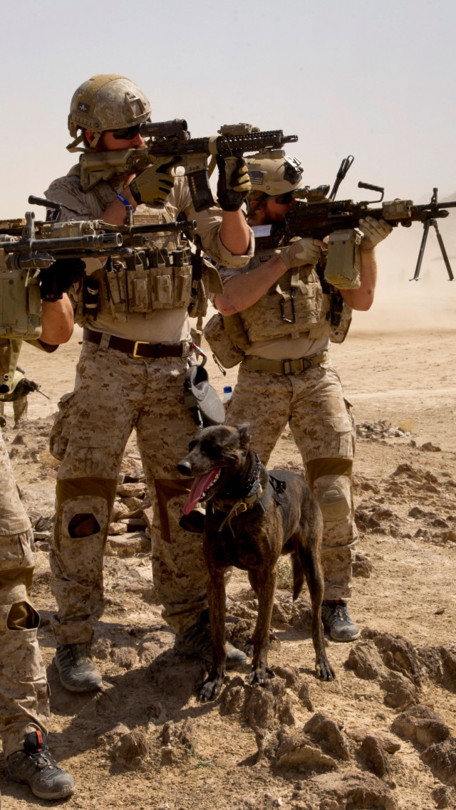 Wallpaper U S Army M16 Rifle Mk 14 Soldier Dog Black