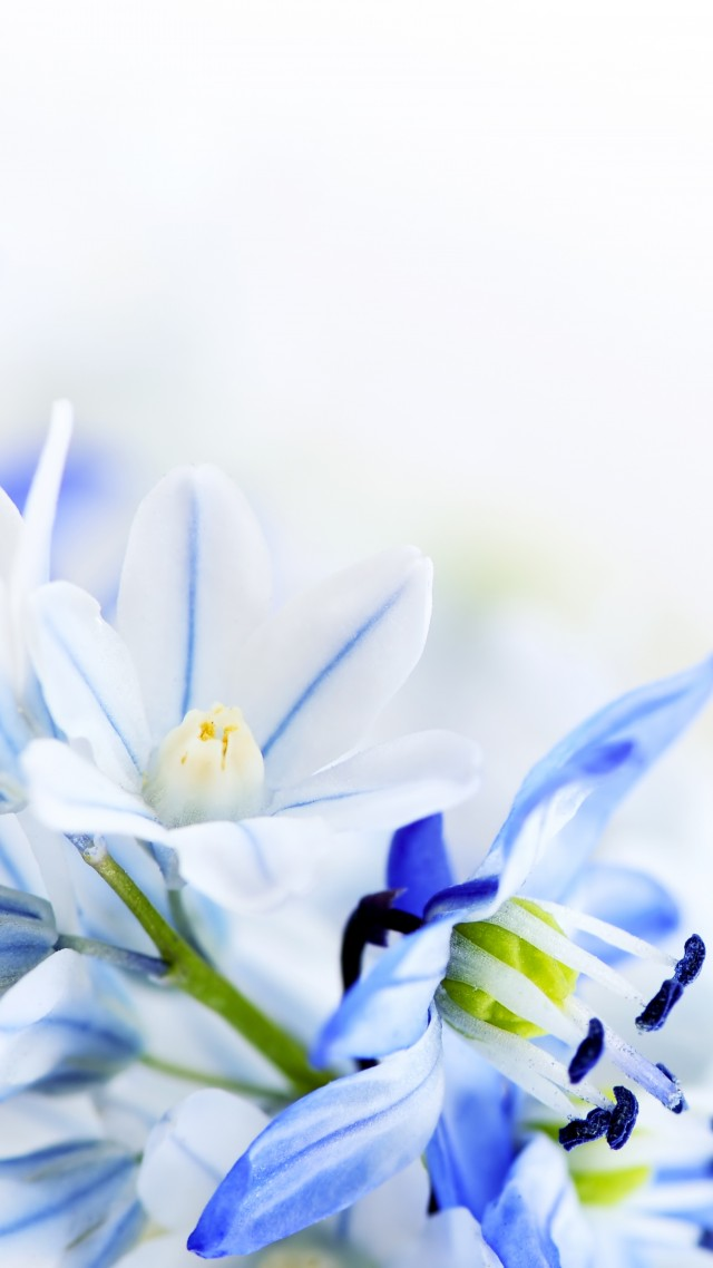 Lilies Of The Valley 5k 4k Wallpaper 8k Flowers Background