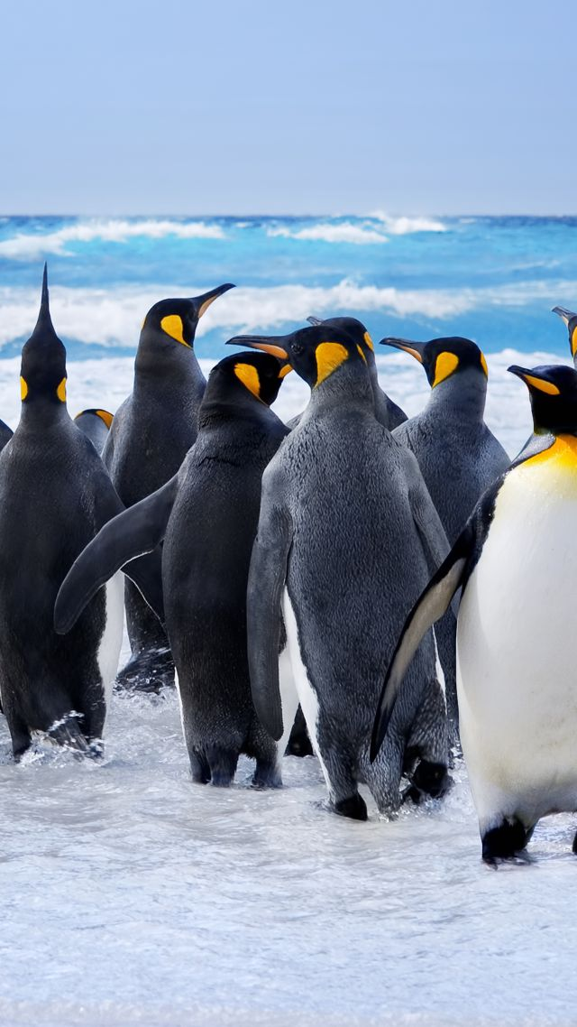 Wallpaper Pinguin Snow Ocean Cute Animals Funny
