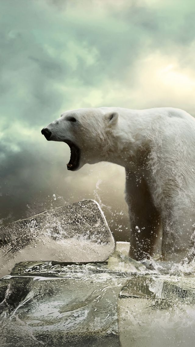 Wallpaper Polar bear, ice, roar, ocean