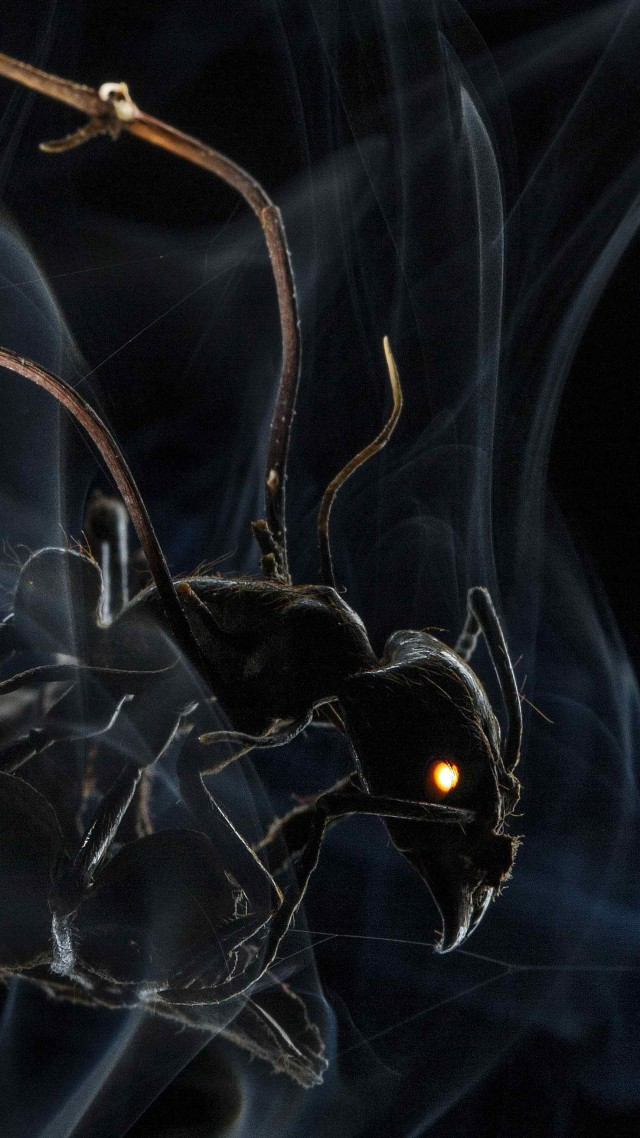 Ant, 4k, 5k wallpaper, HD, macro, smoke (vertical)